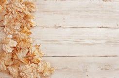 Drewniani tło bielu liście, Drewniana Zbożowa tekstura, deska liść Obraz Royalty Free