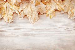 Drewniani tło bielu liście, jesieni adry deski Drewniana tekstura Zdjęcie Royalty Free