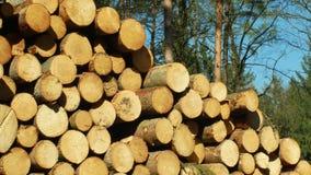 Drewniani wielcy stosy r?ni?ci drzewni baga?niki, round notuj? ?wierkowi lasy atakuj?cy i atakuj?cy Europejsk? ?wierkow? korowat? zbiory wideo