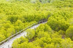 Drewniany ścieżka sposób Fotografia Stock