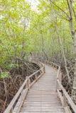 Drewniany ścieżka sposób wśród Namorzynowego lasu Obraz Stock