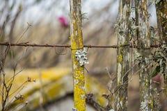 Drewniany żółty mechaty i liszaje Zdjęcie Stock