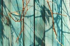 Drewniany błękit malujący ogrodzenie z suchymi gałąź i cieniami jako drewniany tekstury tło Obrazy Stock