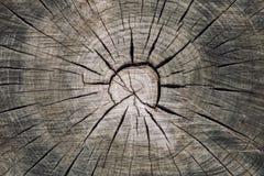 Drewniany bagażnika przekrój poprzeczny z rozłamami drewno i pierścionków koncentrycznymi okręgami Obrazy Royalty Free