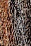 Drewniany bagażnik Obrazy Royalty Free