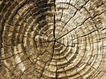 Drewniany bagażnik Zdjęcie Royalty Free