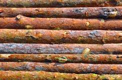 Drewniany beli ogrodzenie Zdjęcia Stock