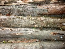 Drewniany beli tekstury tło zdjęcie royalty free