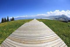 drewniany boardwalk schody wycieczkuje śladu prowadzenie las zdjęcie royalty free