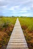 Drewniany boardwalk w bagnie zakrywającym chciwości trawą obrazy stock