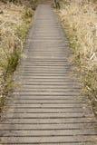 Drewniany boardwalk w kraju parku w Anglia Zdjęcia Stock