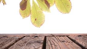 Drewniany deska pokład z widokiem jaskrawego światła zbiory wideo