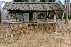 Drewniany dozownik dla lasowych zwierząt, rogacze, łoś obrazy royalty free