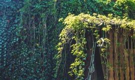 Drewniany drzewny dom przerastający z bluszczem fotografia stock