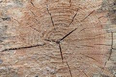 Drewniany drzewny rżnięty tło, pierścionek, okrąg obraz stock