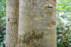 Drewniany Drzewny tekstury tła wzór zdjęcie royalty free