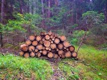 Drewniany drzewo Obrazy Royalty Free
