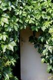 Drewniany drzwi i liście winogrona Zdjęcia Royalty Free