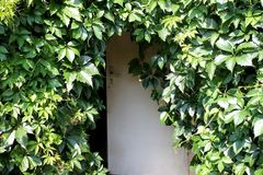 Drewniany drzwi i liście winogrona Obrazy Royalty Free