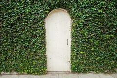 Drewniany drzwi z zielonymi liśćmi Fotografia Stock