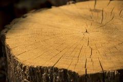 Drewniany fiszorek Zdjęcie Stock