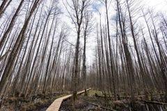 Drewniany footbridge w bagnie Obrazy Stock