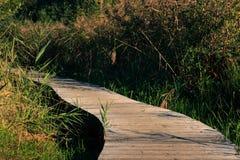 Drewniany footpath, Het Vinne, Zoutleeuw, Flandryjski, Belgia obrazy stock