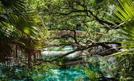 Drewniany Footpath nad basenami Fotografia Royalty Free