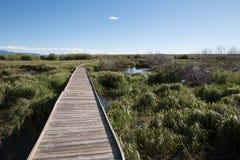 Drewniany Footpath przez Riparian terenu Obraz Stock