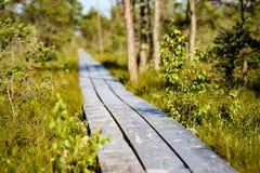 drewniany footpath w bagnie Obraz Royalty Free