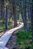 drewniany footpath w bagnie Zdjęcie Stock