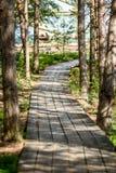 drewniany footpath w bagnie Zdjęcie Royalty Free