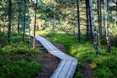 drewniany footpath w bagnie Obrazy Royalty Free