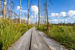 drewniany footpath w bagnie Obrazy Stock