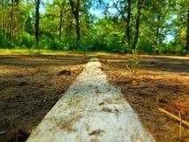 Drewniany footpath w dębowym lesie Zdjęcia Stock