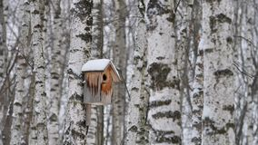 Drewniany gniazdować pudełko na brzoza drzewnym bagażniku zbiory wideo