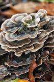 Drewniany grzyb na nieżywym drzewie Zdjęcie Royalty Free