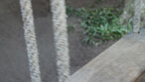 Drewniany huśtawkowy chodzenie w ogródzie zbiory