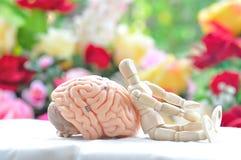 Drewniany istota ludzka model i mózg istota ludzka modelujemy Zdjęcia Stock
