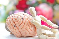 Drewniany istota ludzka model i mózg istota ludzka modelujemy Zdjęcia Royalty Free