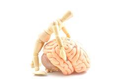 Drewniany istota ludzka model i mózg istota ludzka modelujemy Obrazy Stock
