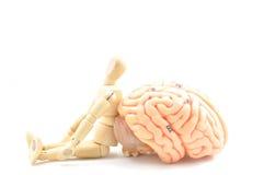 Drewniany istota ludzka model i mózg istota ludzka modelujemy Zdjęcie Royalty Free