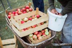 Drewniany jabłka pudełko, żniwo obraz stock