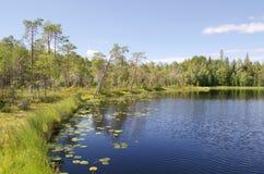 Drewniany jezioro Zdjęcia Royalty Free