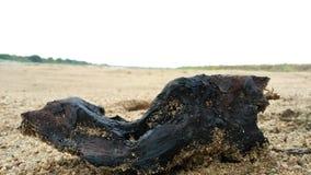 Drewniany kawałek w opustoszałym terenie Obraz Royalty Free