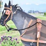 Drewniany koń Obrazy Stock
