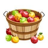Drewniany kosz z kolorowymi jabłkami. Fotografia Royalty Free