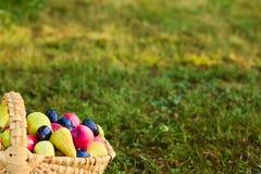Drewniany koszykowy pełny lato rozmaitość jabłka, bonkrety i śliwki, obrazy stock