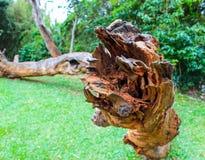 Drewniany krzesło na trawie zdjęcia royalty free