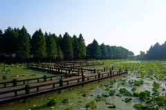 Drewniany most na lotosowym basenie Obrazy Royalty Free
